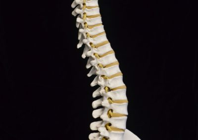 4_Model of cervical, thoracic and lumbar spine